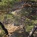 Blick auf die obere, südliche Seite der Felswand (rechts davon gehts ca. 20m senkrecht runter). Nix zum rumkraxeln. Leider.