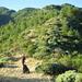 schöner Pfad am Col de Jou