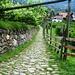 Wanderweg Nr. 7 durch einen Weinberg von Algund