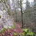 nach P. 935 gehen wir nordseitig dem sich lange hinziehenden Felsriegel entlang ...
