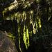 Die Rückkehr in den Regenwald nach der Stein- und Eiswüste der Gipfelregion ist auch wieder ein besonders schöner Moment