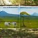 Im Garten bei der Firma KAT (Kilimanjaro Active Tours)