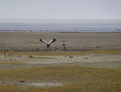 Im Ngorongoro-Krater treffen wir auf eine reiche Tierwelt