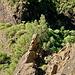 """Der """"Wächter"""" des Barranco de las Angustias (zufällig entdeckte Steinfigur im Barranco)"""