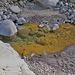 Eisen färbt das Bachwasser zum Teil goldig