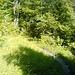 Wanderweg irgendwo zwischen Tällihütte und Talstation