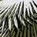 Verzuckerte Palmblätter