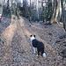 Viel Laub auf dem Waldweg nach Carona