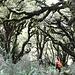 8-10 m Niederschlag im Jahr lassen so einen Wald gedeihen