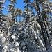 Verschneiter Wald am Kahlberg, viel mehr gibt es dort auch nicht zu sehen