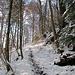 lauschiger Aufstieg im Wald ...