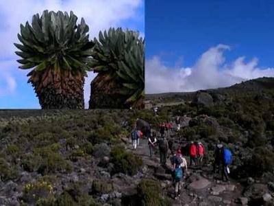 """Kilimanajaro 5895m via Marangu Route und 2 Täg Safari im Tarangire Park   Bericht und weitere Bilder <a href=""""http://www.cornelsuter.ch/fotoalbum/2010/kilimanjaro/index.htm"""" rel=""""nofollow"""" target=""""_blank"""">mehr</a>"""