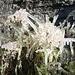 Vereiste Blume      [http://www.matthias.hikr.org Home]