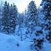 Weiter gehts durch schattigen, relativ dichten Bergwald hinauf.