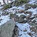 immer weiter nach oben, der Weg schneebedeckt und teilweise glatt. Mit Kathoolas aber kein Problem.