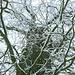 Das Ästegewirr einer Eiche über der Allee am Egglburger See