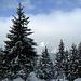 Wunderbare Winterlandschaft, den ganzen Tag lang.