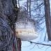 Estrema simbiosi (quasi non si capisce dove comincia il fungo e dove finisce il tronco)