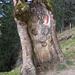 Verwegener, bewanderwegter, ausgehöhlter Baum