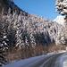La magia del bosco coperto di neve nuova