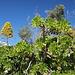 Unweit der Kalypso-Grotte (Calypso Cave / L-Għar ta' Calypso) - Den ganzen Tag über begleitet uns frühlingshaftes Wetter und immer wieder viel Grün ..