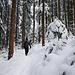 Idyllischer Waldsteig mit...
