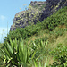 Steilhang mit schöner Vegetation,hier ging es aber nicht mehr weiter
