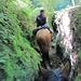Später im dichten Urwald: für einmal kein Zustieg, sondern ein Zuritt   ins Valle Cochamó. <br />Die Jahrhundertelange Begehung liess veritable Canyons entstehen!