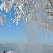 Überalll rieselt Schnee von den Bäumen.