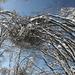 La neve modella il bosco...