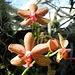 fantastische Orchideen 3