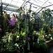 ... und vielfältige tropische Pflanzen- und Blumenwelt