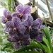 fantastische Orchideen 2