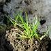 Frisches Gras spriest schon<br />