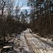 Der Wanderweg durch den Auwald ist recht mühsam und teilweise weich