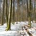 Durch den sonnendurchfluteten Wald am Oberholz