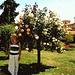 Roseto del Jardin du Thabor.