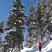 Aufstieg zum Kampl im tief verschneiten Wald