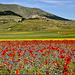Castelluccio di Norcia visto dal Piano Grande durante la fioritura...