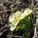 Frühling lässt grüssen