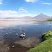 Freundliche Stimmung an der Laguna Colorada...