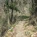 die Vegetation entlang des Aufstiegs noch etwas winterlich