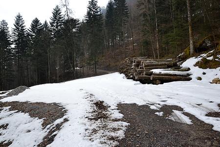 Die neue Forststrasse. Weder diese noch der weiterführende Pfad sind in der Landeskarte verzeichnet.