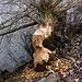 Natürliche Baumfällarbeiten an naturfernem Gewässer.