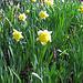 Der Frühling wäre bereit