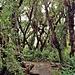 Tag 1: Weg Richtung Machame-Camp