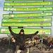 Tag 6: Uhuru-Peak