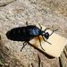7. Tag: Dieser Käfer bekommt auch etwas ab.