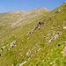 8. Tag: Trockene und heiße Bergflanken werden gequert.