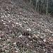 Ausstieg von der Rebegg-Rippe über Brombeergestrüpp: zu Vegetationszeit ein zweifelhaftes Vergnügen.